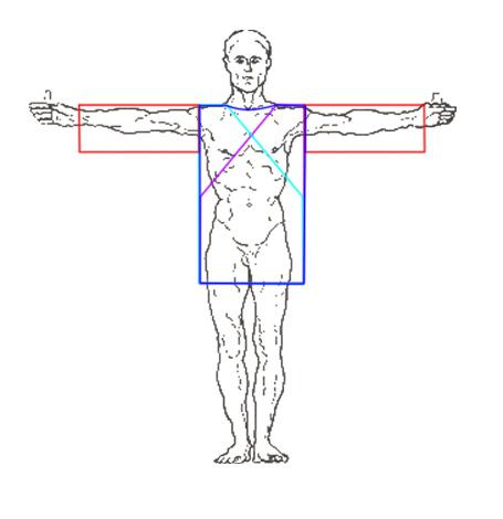 как это всё располагается по телу